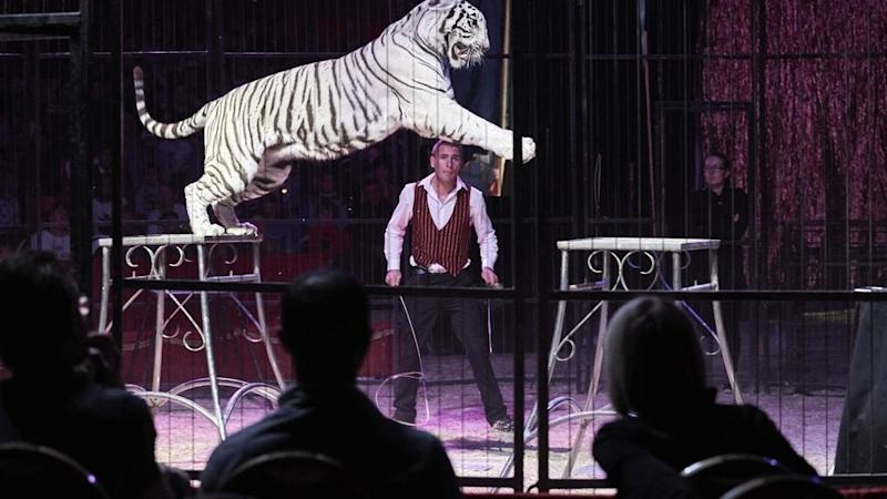 France to 'gradually' ban wild animals from circuses