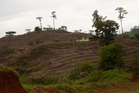 Example of local deforestation -- Photo: Pete Monfre