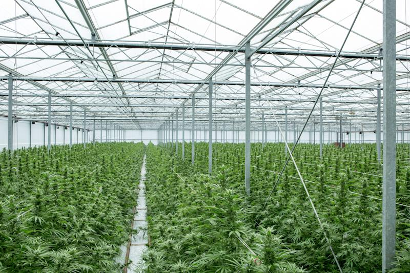 Updated: What You Need to Know About Epidiolex, the First FDA-Approved Drug Made From Cannabis