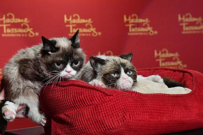 """Grumpy Cat and her famous """"No Face"""" inspired Madame Tussaud's to create a doppelganger of the internet sensation (AFP Photo/Larry French)"""