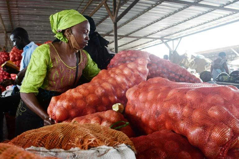 The head of Senegal's onion producers association said the government suspended onion imports in January in a bid to help struggling locals (AFP/SEYLLOU)