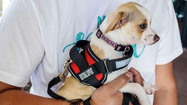 PHOTO: An emotional support animal or 'ESA' in an undated photo. (Jeff Greenberg/Universal Images/Getty Images)