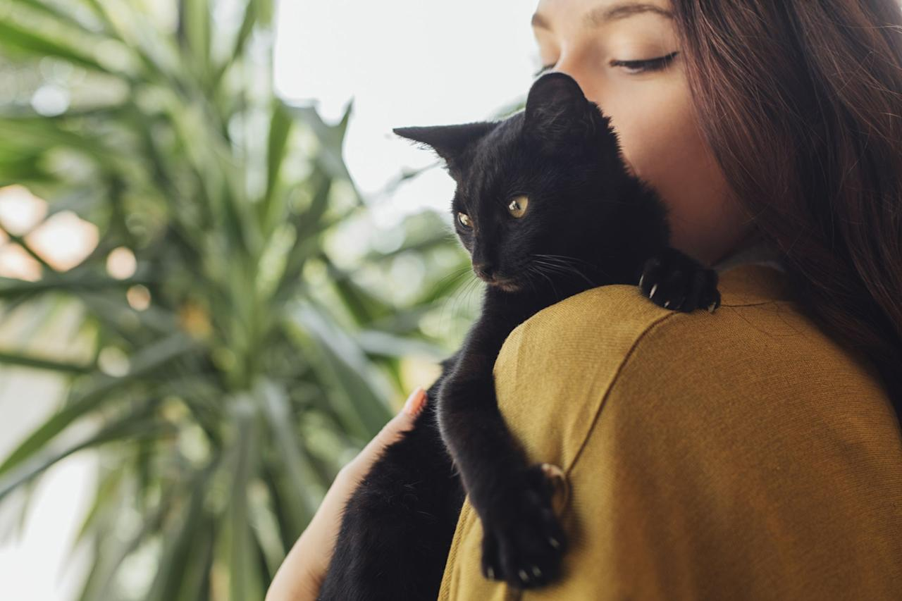 """<p>Black cats get a bum rap. But despite being portrayed as witches' sidekicks and bad omens, black cats are actually some of the sweetest cats around. There are more black cat breeds than you might think, and every single one is a better companion than the last. Some fun facts: in Japan, <a href=""""https://www.animalrescueprofessionals.org/national-days/black-cat-month/"""" target=""""_blank"""">women who own black cats are believed to attract more suitors</a>. In Great Britain's English Midlands, <a href=""""https://ambassadoranimalgreenville.com/myths-and-facts-about-black-cats/"""" target=""""_blank"""">black cats are believed to bring good luck and happiness</a>, making them the perfect wedding gift. 19th-century sailors even believed that <a href=""""https://pawesomecats.com/black-cats-good-luck-or-bad-luck/"""" target=""""_blank"""">black cats would ensure a safe trip and eventual return home</a>.</p><p>Black cats are also likely to live longer lives. Researchers at the National Institutes of Health discovered that <a href=""""http://www.cnn.com/2003/HEALTH/03/04/cats.research.reut/"""" target=""""_blank"""">the genetic mutations that cause cats to have black coats may also protect them from diseases,</a> such as HIV. If you're not yet convinced that your home needs a black cat, just check out these 11 adorable black cat breeds.</p>"""