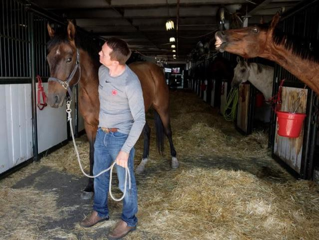 From hospital ward to chuckwagon track: device could help measure horse fitness