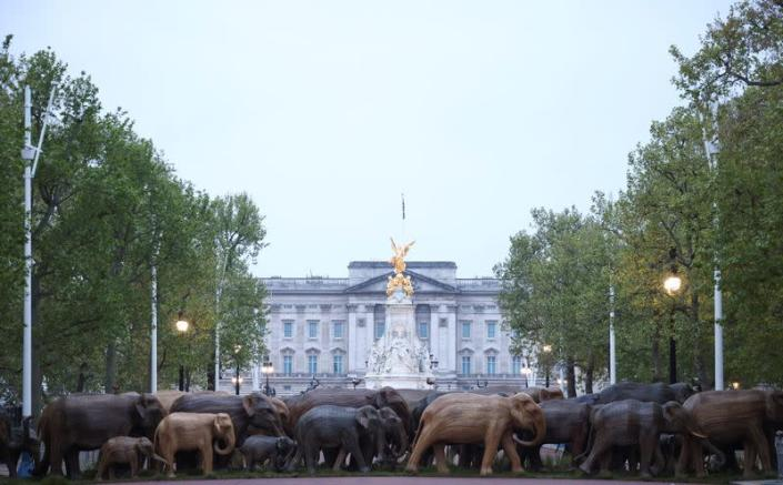 Life-size elephant sculptures are paraded down the Mall in London