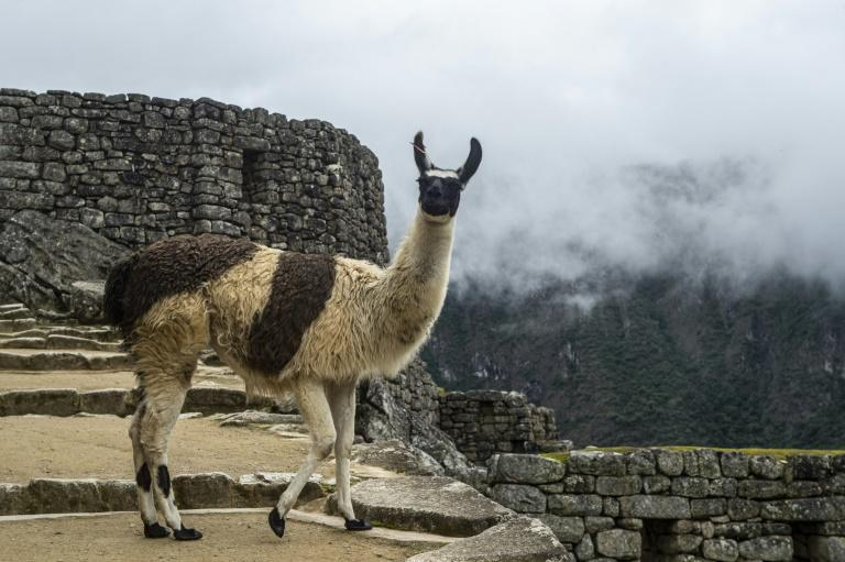 Closing Machu Picchu to help contain the spread of the deadly novel coronavirus has resulted in severe job losses across the region