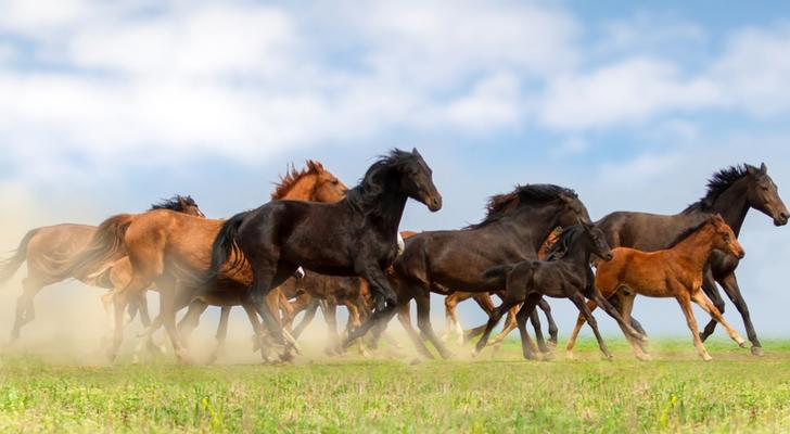 Akamai Stock Is a Wild Horse - Here's How to Tame It