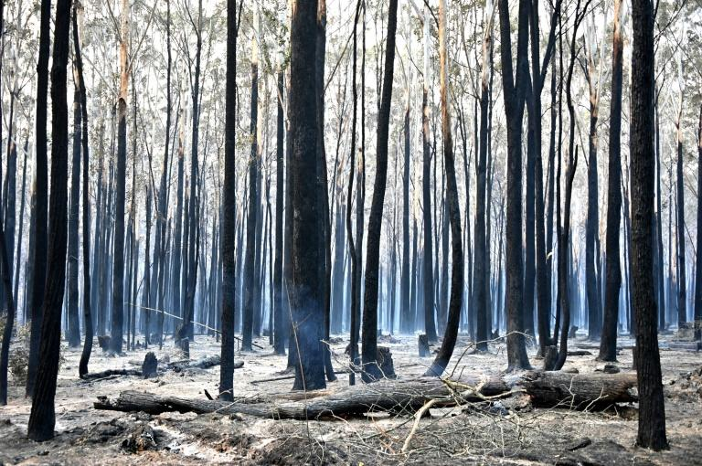 A vast area of New South Wales has already been burned by the fires (AFP Photo/PETER PARKS)