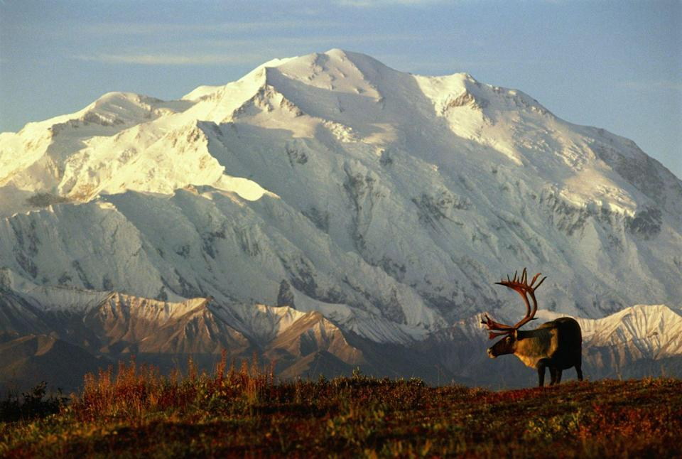 """<p><a href=""""https://www.nps.gov/dena/index.htm"""" rel=""""nofollow noopener"""" target=""""_blank"""" data-ylk=""""slk:Denali National Park"""" class=""""link rapid-noclick-resp""""><strong>Denali National Park </strong></a></p><p>The Land of the Midnight Sun is home to eight National Parks and a total of 17 sites run by the National Park Service. You can't go wrong with any of them, as they are all filled with some of the most pristine natural beauty anywhere in the world. But Denali is home to North America's tallest peak (the mountain previously also known as Mt. McKinley), and has six million acres of wild land to discover.</p>"""
