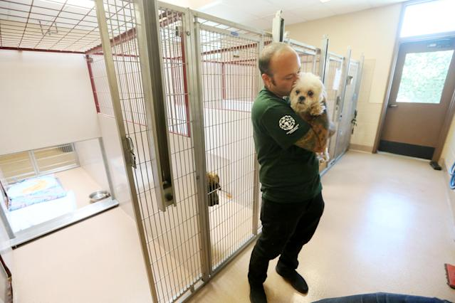 <p>In this image released on Thursday, Sept. 24, 2015, Adam Parascandola, Humane Society International's director of animal protection and crisis response, holds a small dog at the San Diego Humane Society. The dog is one of 103 dogs rescued from a dog meat farm in South Korea in mid-September as part of HSI's campaign to fight the dog meat trade throughout Asia. The dogs were transported to animal shelters in California and Washington State, where they will be evaluated and put up for adoption. (Sandy Huffaker/AP Images for The Humane Society of the United States) </p>