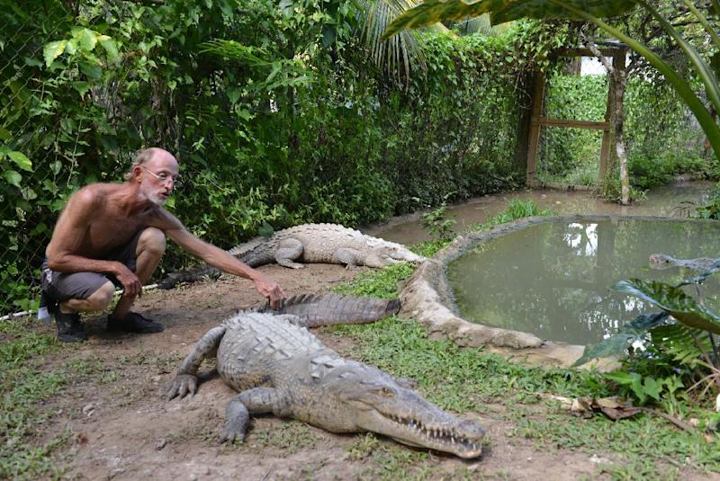 In this Sunday, Sept. 29, 2013 photo, crocodile enthusiast Lawrence Henriques pats the tail of a seven-foot female crocodile at a sanctuary and captive rearing program he founded in the mountain town of Cascade in northern Jamaica. He set up the facility as a domestic market for crocodile meat and even eggs as conservationists worried that the big reptiles, protected by law since 1971 and already endangered by the steady loss of their wetland habitat, might be wiped from the wild altogether. (AP Photo/David McFadden)