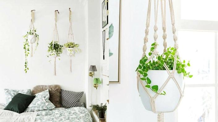 Hanging planters are especially useful if your pets like to chew on your plants.