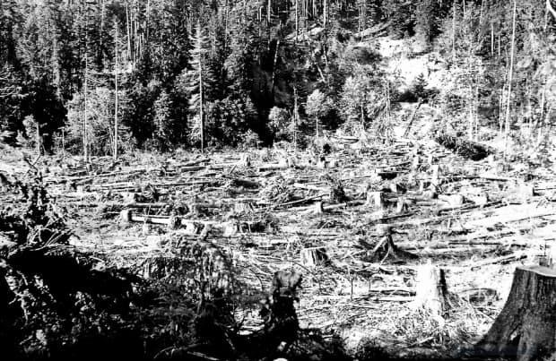 The landscape after logging at the edge of Buttle Lake in the late 1930s.