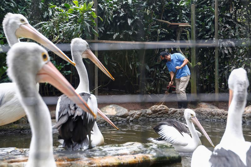 A worker sweeps a pelicans' enclosure at a zoo, amid the coronavirus disease (COVID-19) outbreak in Bandung