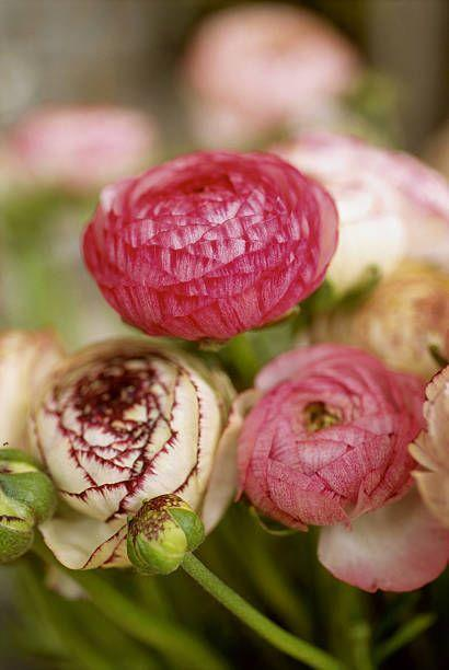 """<p>These beautiful flowers that resemble roses or peonies are planted in the spring for summer blooms. They're typically considered perennial in zone 8 and warmer, but they're treated as annuals in colder climates (though you can lift the bulbs in fall and try replanting next year). Need full sun.</p><p>Varieties to try: Double Pink, Double Purple</p><p><a class=""""link rapid-noclick-resp"""" href=""""https://go.redirectingat.com?id=74968X1596630&url=https%3A%2F%2Fwww.homedepot.com%2Fp%2FVAN-ZYVERDEN-Butter-Cups-Ranunculus-Double-Blooming-Mixed-Bulbs-Set-of-25-11290%2F301135434&sref=https%3A%2F%2Fwww.housebeautiful.com%2Fentertaining%2Fflower-arrangements%2Fg2411%2Fpopular-flowers-summer%2F"""" rel=""""nofollow noopener"""" target=""""_blank"""" data-ylk=""""slk:SHOP NOW"""">SHOP NOW</a></p>"""