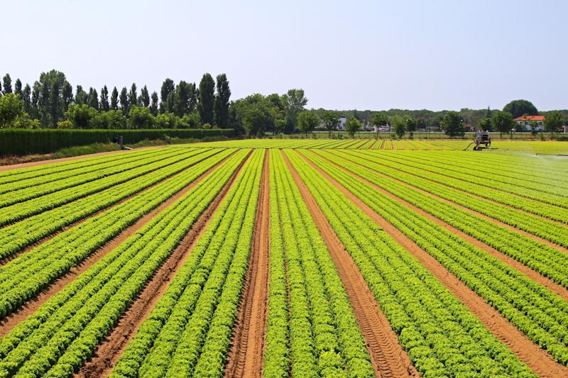 Opposed to GMOs? Are Monsanto's new CRISPR crops any better?