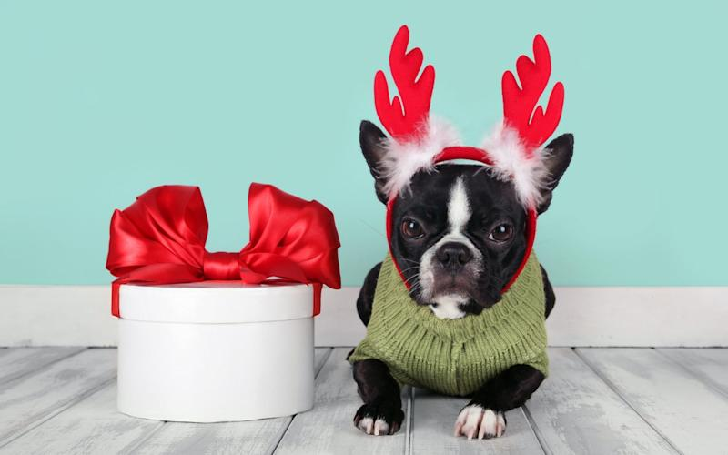 Boston terriers are also on the list - GETTY IMAGES