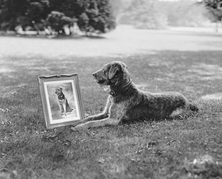 Laddie Boy poses with his portrait. (Photo: Getty Editorial)