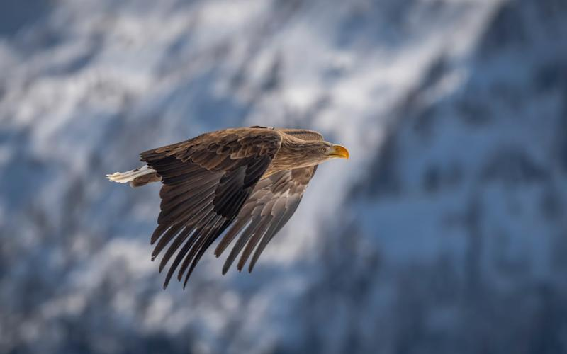 Soar with, and like, an eagle in the French resort of Morzine - Christian Pfahl