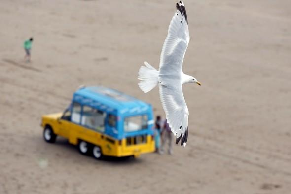 British seaside resort calls for 'gull cull' after aggressive behaviour
