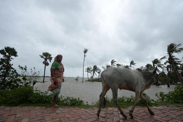 """A woman walks next to a cow along an embankment ahead of the expected landfall of cyclone Amphan, in Dacope on May 20, 2020. - Several million people were taking shelter and praying for the best on Wednesday as the Bay of Bengal's fiercest cyclone in decades roared towards Bangladesh and eastern India, with forecasts of a potentially devastating and deadly storm surge. Authorities have scrambled to evacuate low lying areas in the path of Amphan, which is only the second """"super cyclone"""" to form in the northeastern Indian Ocean since records began. (Photo by Munir Uz zaman / AFP) (Photo by MUNIR UZ ZAMAN/AFP via Getty Images)"""