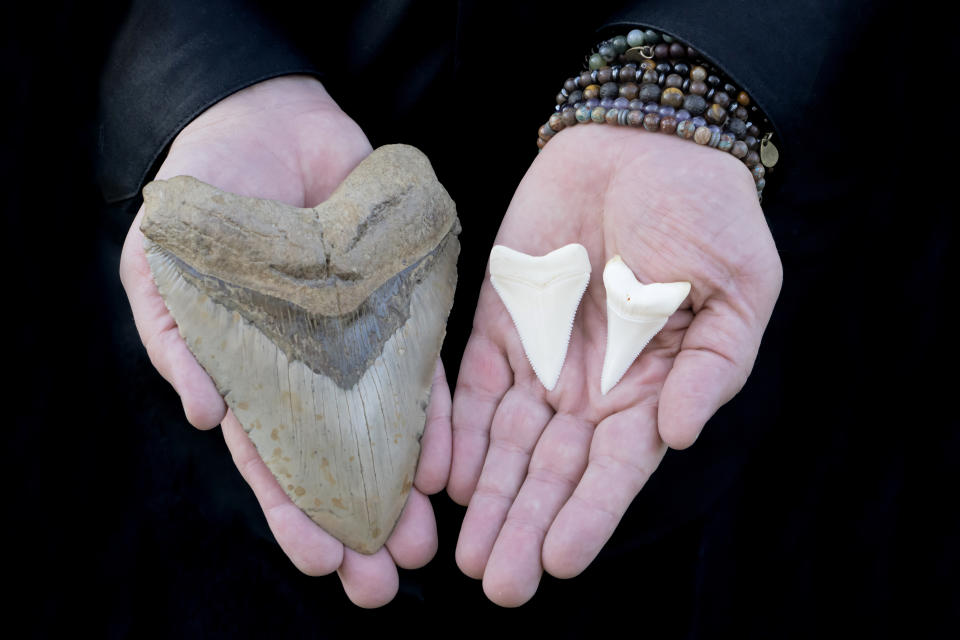Prehistoric Megalodon Shark Tooth and two Great White Shark Teeth