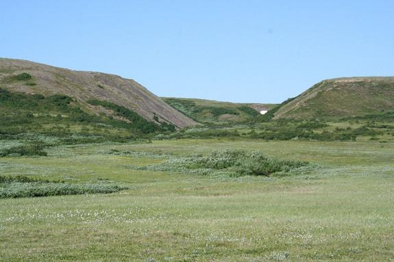 Tundra Shrubs Turn into Trees as Arctic Warms