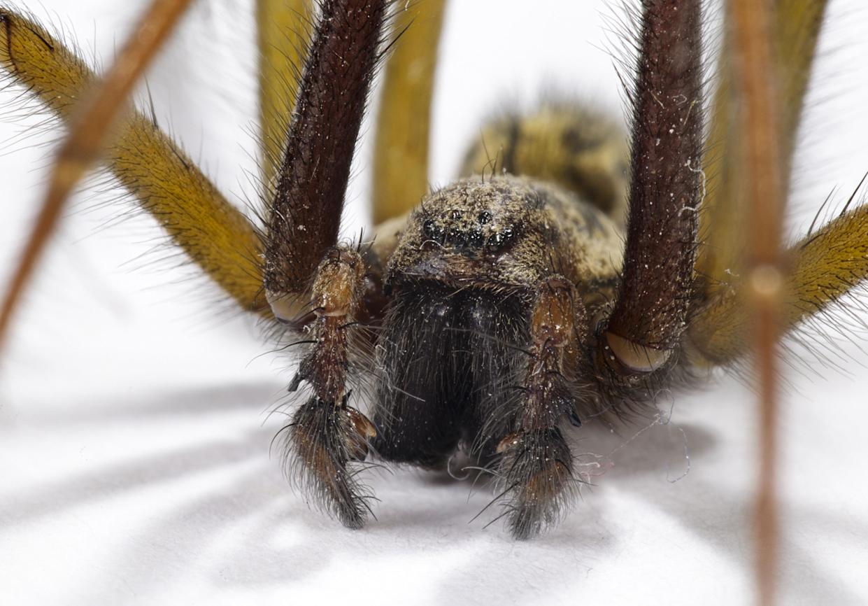 Have mercy on spiders (Picture Rex)