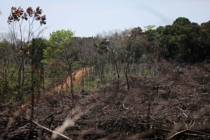 FILE PHOTO: View of a deforested area in the middle of the Yari plains, in Caqueta