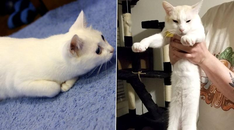 Nobiko, Famous 'Longcat' Viral Meme Feline Dead at 18, Netizens Share Pics of Their Beloved Feline in Remembrance of the Iconic Cat