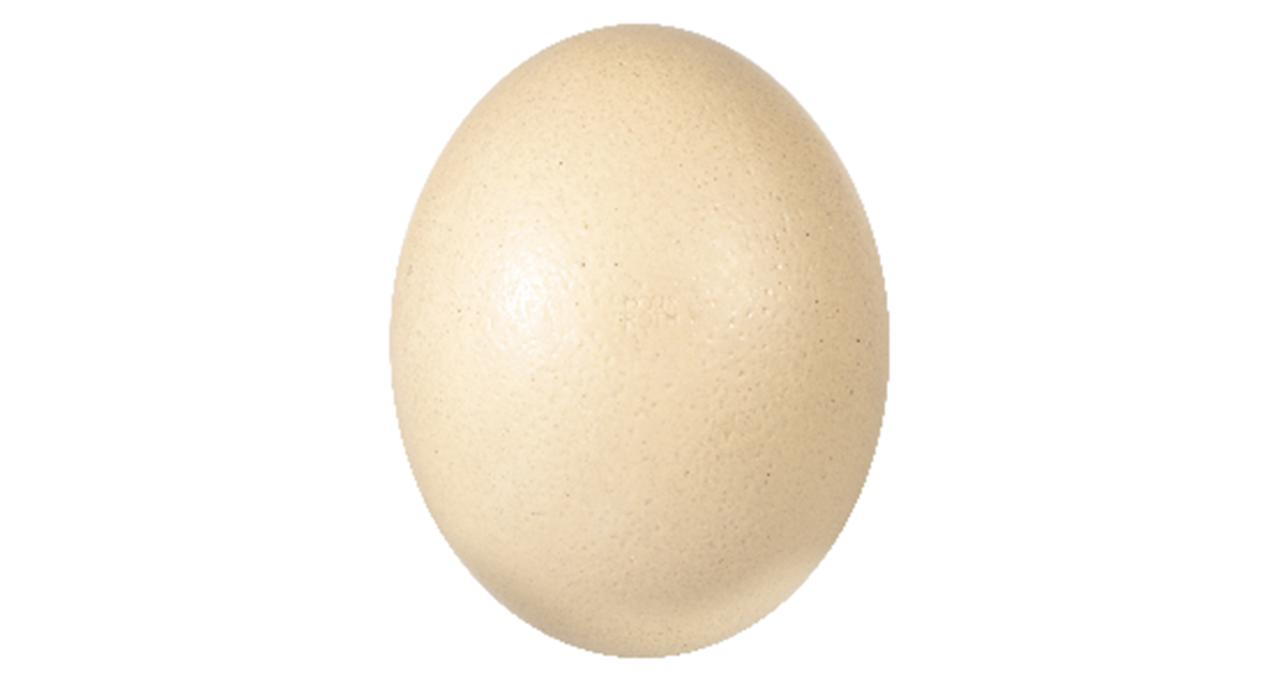 """The Moser Roth egg garnered a lot of attention because of its sheer size (larger than a human head) and its luxury appearance. Sadly, it fell down in the taste test, scoring among the lowest. One person described it as having """"a bitter, soapy after-taste"""". However, others called it """"strangely addictive"""", despite not actually enjoying the taste. (£14.99, available in-store at Aldi) <em>[Photo: Aldi]</em>"""