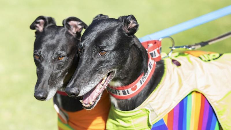 VICTORIA GREENS END GREYHOUND RACING RALLY
