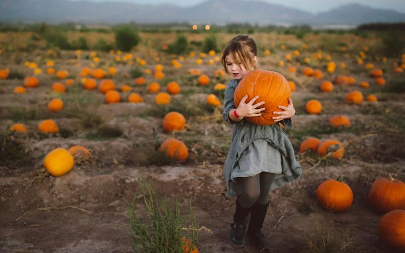 The perfect pumpkin: hunt for your own in the fields this year - Moment RF