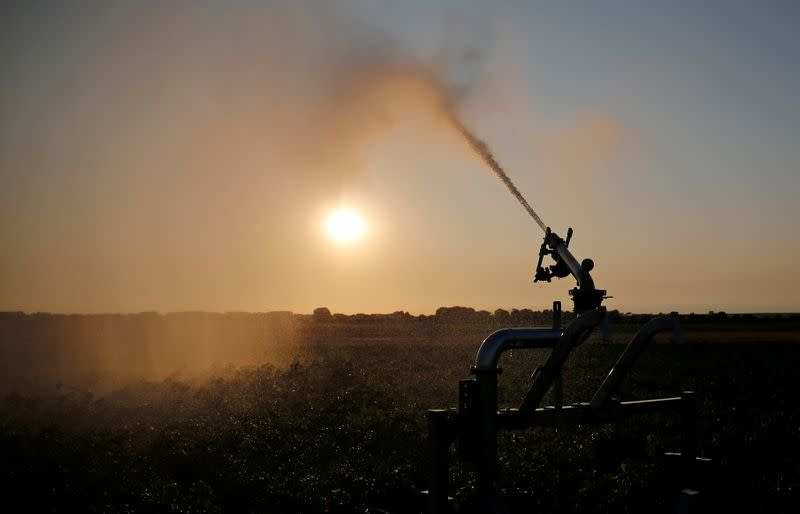 FILE PHOTO: A farmer irrigates his field of potatoes during sunset, in Tilloy-Lez-Cambrai