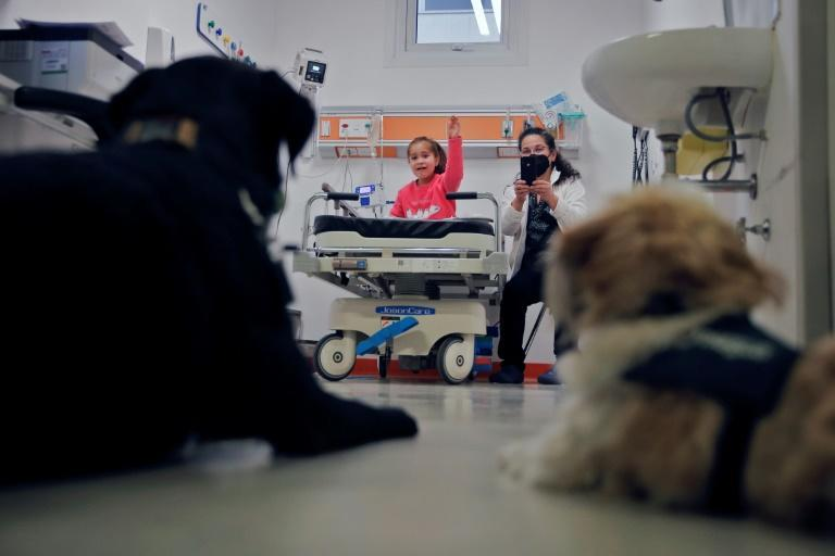 The dogs -- mainly Labradors and Golden Retrievers, animals known for their calm demeanor -- are trained from an early age to handle the stressful hospital environment