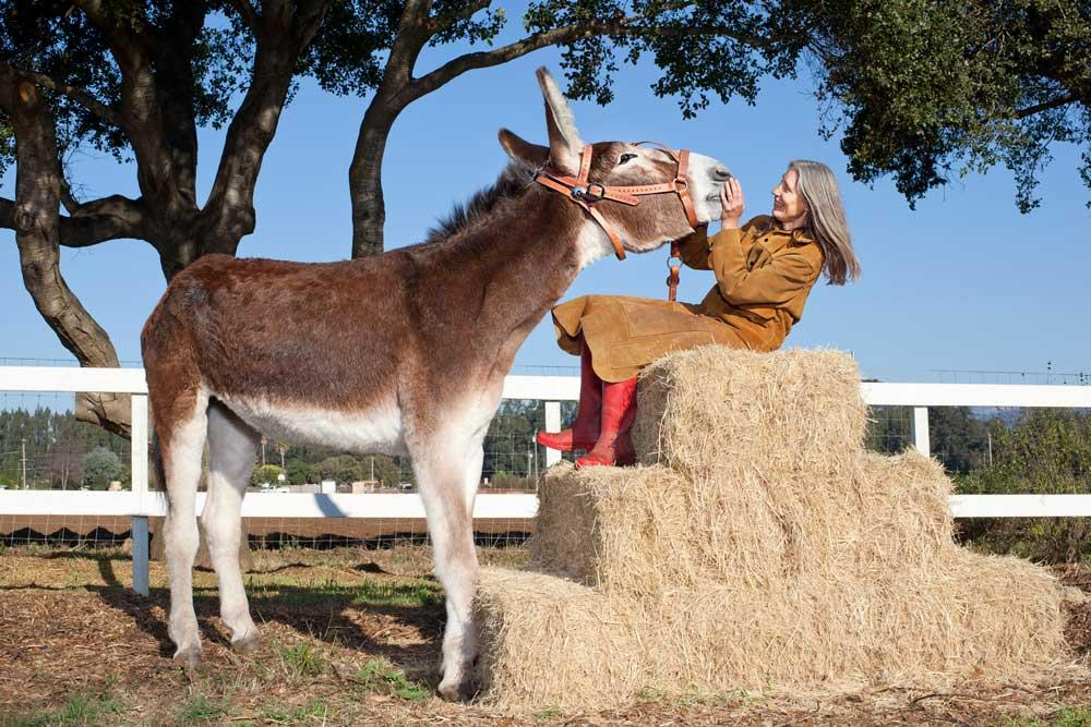 Oklahoma Sam, recognised as the Tallest Donkey (61 inches (155.45 cm) from hoof to withers).