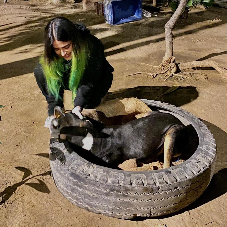 Vibha made cozy homes out of old and used tyres with rugs inside which would not only keep the animals warm and safe