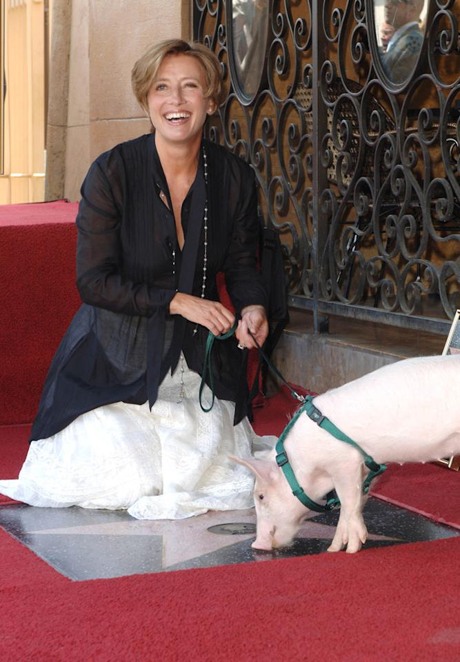"""Emma Thompson was honored with a star on the Hollywood Walk Of Fame Friday. In addition to celeb pals Maggie Gyllenhaal and Hugh Laurie, the """"Nanny McPhee"""" actress also had a little piggy friend on hand to help her celebrate! Craig Barritt/<a href=""""http://www.wireimage.com"""" target=""""new"""">WireImage.com</a> - August 6, 2010"""