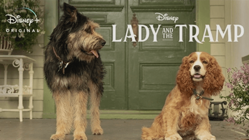 Lady And The Tramp will stream exclusively on Disney+ (Credit: Disney)