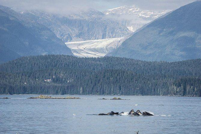 "<p><strong><a href=""https://www.viator.com/tours/Juneau/Whale-Watch-and-Mendenhall-Glacier-Combo-Tour/d941-5857P22"" target=""_blank"">Whale Watch and Mendenhall Glacier Combo Tour</a></strong></p><p><strong>Juneau, Alaska</strong></p><p>Two of the most popular tourist attractions in the state are whale watching and visiting the Mendenhall Glacier. You can check both off your list with this half-day tour in Juneau. There are multiple departure times throughout the day, so it's a flexible schedule for travelers, and it allows you to spot stunning glaciers and whales against a gorgeous backdrop.</p>"