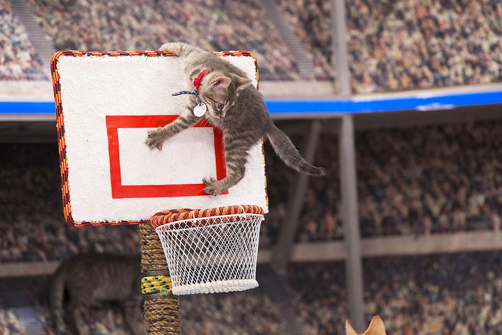 <p>The claws are most definitely out. (Credit: Marc Lemoine/Crown Media) </p>