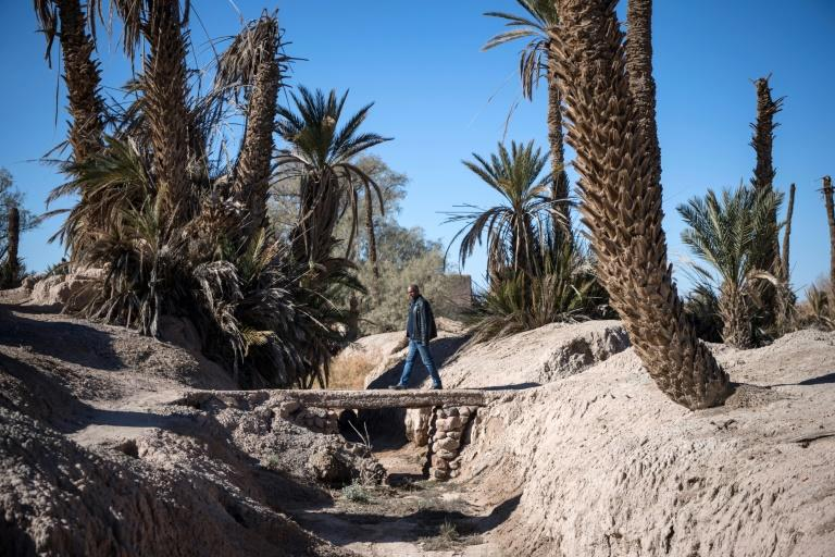 Long a buffer against desertification, Morocco's oases have gone through cycles of drought in recent decades and according to Greenpeace are now threated with extinction (AFP Photo/FADEL SENNA)