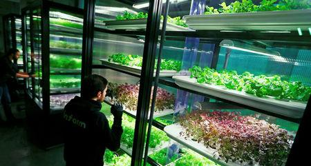 An employee of the urban farming start-up Infarm checks an indoor growing system at the company's showroom in Berlin, Germany, February 5, 2018. REUTERS/Hannibal Hanschke