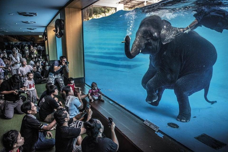 Elephant in the room by Adam Oswel won the Wildlife Photographer of the Year: Photojournalism Award (Adam Oswel/Wildlife Photographer of the Year/PA) (PA Media)