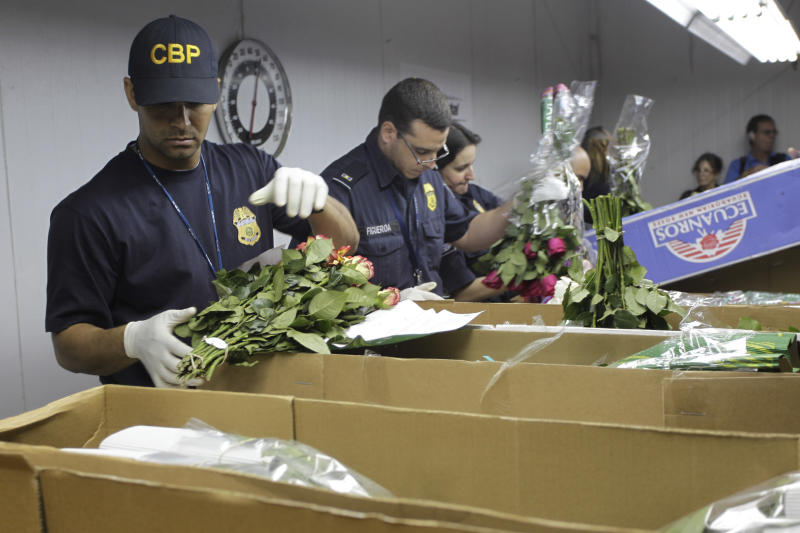 Customs agents check incoming flowers at Miami International Airport Thursday, Feb. 3, 2011. Amid the peak Valentine's Day flower season, U.S. agents in Miami are working overtime to make sure pretty love bouquets are not used as transportation by exotic South American pests or cocaine traffickers. More than eight out of every 10 cut flowers imported to the U.S. come through Miami International Airport. Colombia and Ecuador are the main sources of imported flowers, with Colombia also a leading cocaine producer.   (AP Photo/J Pat Carter)