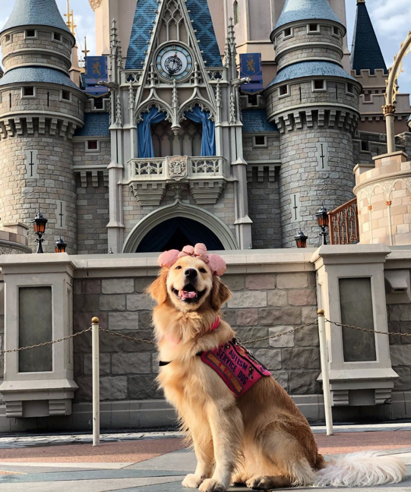 Service dog Nala in one of her favorite places: Disney World. (Photo courtesy of @helperdognala)