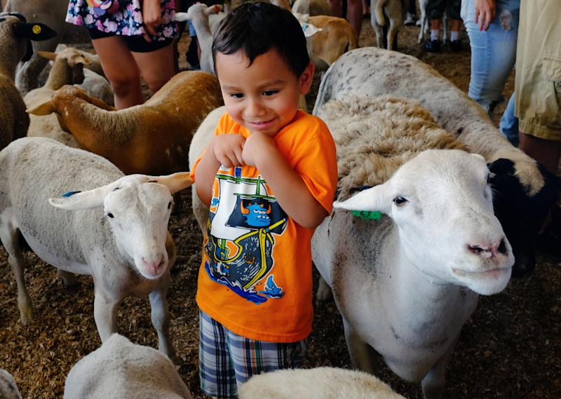 Zoos make party animals out of goats and sheep