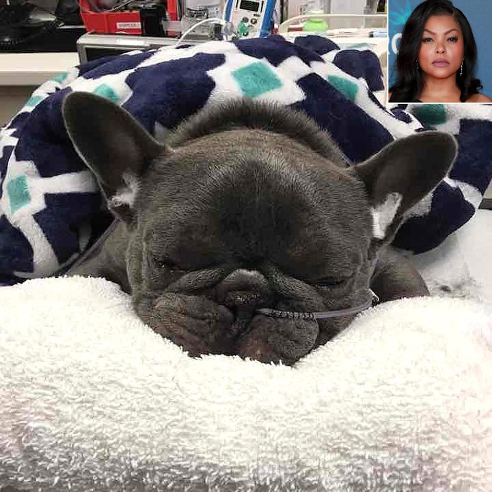 """<p>Taraji P. Henson is <a href=""""https://people.com/pets/taraji-p-henson-mourns-death-dog-kball/"""" rel=""""nofollow noopener"""" target=""""_blank"""" data-ylk=""""slk:mourning the loss of her French bulldog"""" class=""""link rapid-noclick-resp"""">mourning the loss of her French bulldog</a>, who died in late March following complications from surgeries. The actress revealed on Instagram that K-Ball had breathing issues and that """"his trachea was the size of a straw,"""" which meant normal activities became """"very difficult for him.""""</p> <p>""""He had two surgeries and his Lil body couldn't take it,"""" <a href=""""https://www.instagram.com/p/CNADLf7D_-a/?utm_source=ig_embed"""" rel=""""nofollow noopener"""" target=""""_blank"""" data-ylk=""""slk:she wrote"""" class=""""link rapid-noclick-resp"""">she wrote</a>. """"I gave you the best three years ever. Private jets vacations shopping movie sets photo shoots the best dog food money could buy and ALL OF MY LOVE!!! Jesus this is hard and yes I AM A WRECK!!!""""</p>"""
