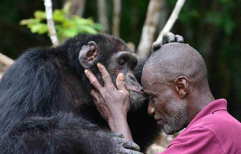 "Ponso's dedicated carer Germain Djenemaya Koidja says the ape is ""like my child"" (AFP Photo/ISSOUF SANOGO)"