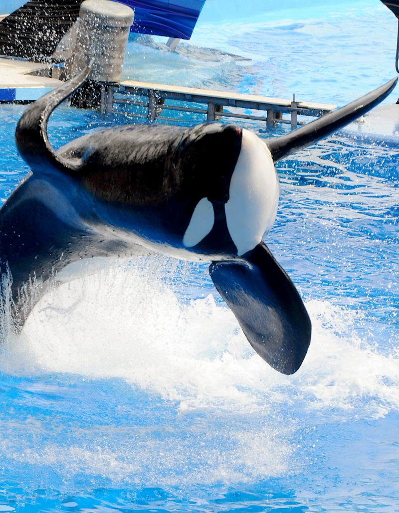 Tilikum's Legacy: How the Late SeaWorld Orca Changed the